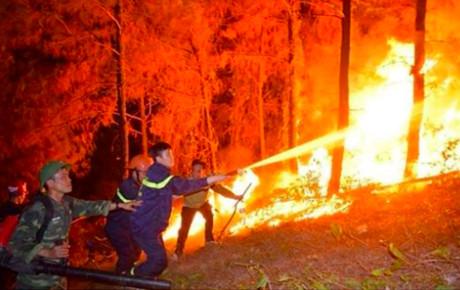 Dàn sao Việt thất thần, đau xót khi chứng kiến cháy rừng kinh hoàng ở Hà Tĩnh